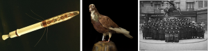 Left image is the satellite <em>Explorer 1</em>, a metal tube with a bullet-shaped nose, illuminated in a golden hue. The middle image is a photo of a taxidermy pigeon with a message capsule attached to his right leg. Right image is a black and white group photo of uniformed telephone operators who served in France during World War I.